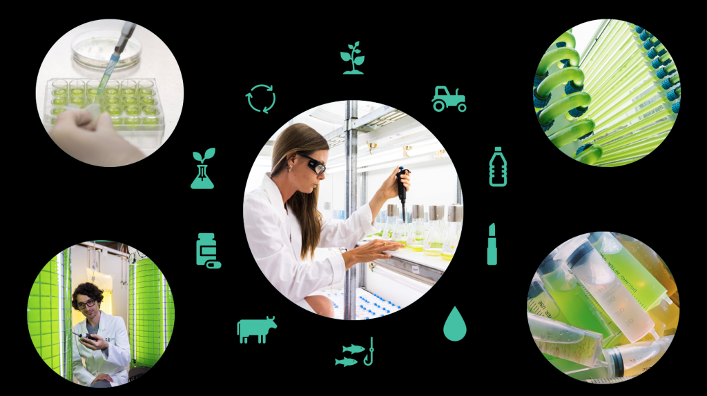 Graphic for the Algae Innovation Challenge